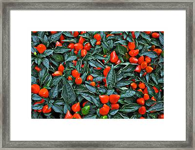 Red Hots Framed Print by Mary Machare