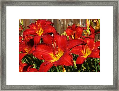Red Hots Return Framed Print by Bruce Bley