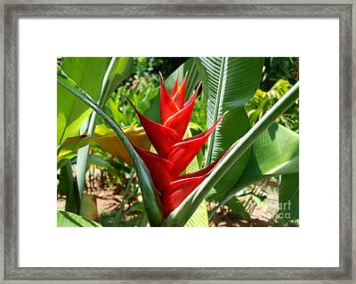 Red In A Flower Framed Print by Pravine Chester