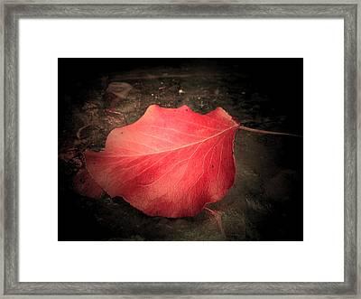 Red Leaf  Framed Print by Beth Akerman