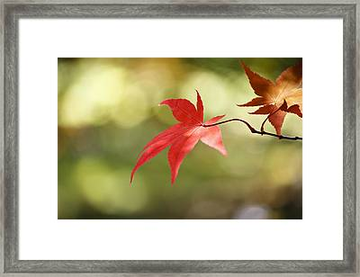 Red Leaf. Framed Print by Clare Bambers