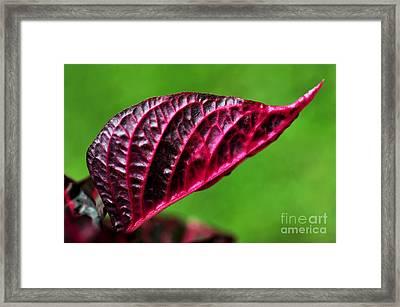 Red Leaf Framed Print by Kaye Menner