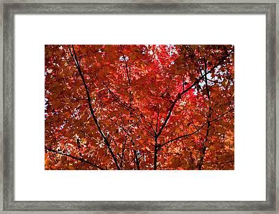 Red Leaves Black Branches Framed Print