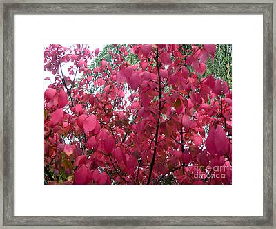 Red Leaves I Framed Print by Alys Caviness-Gober