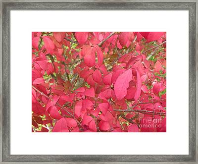 Red Leaves IIi Framed Print by Alys Caviness-Gober