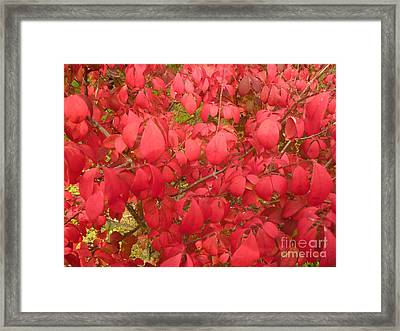 Red Leaves Iv Framed Print by Alys Caviness-Gober