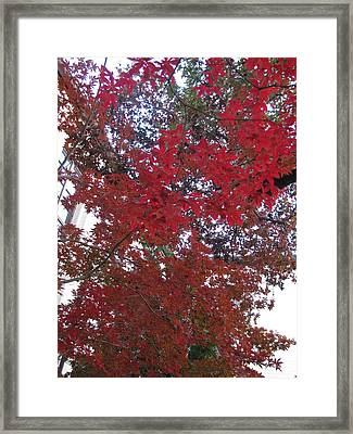 Red Leaves Of Windsor Framed Print by Shawn Hughes