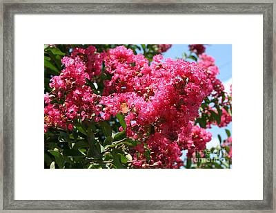 Framed Print featuring the photograph Red Lilac Bush by Michael Waters