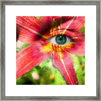Red Magic Daylily Framed Print