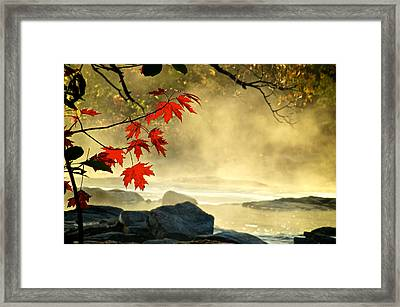 Red Maple Leafs In Fog Framed Print
