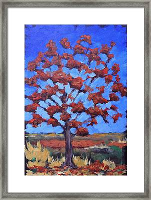 Red Maple Framed Print by Lisa Masters