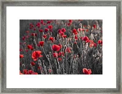 Red Framed Print by Octavian Chende