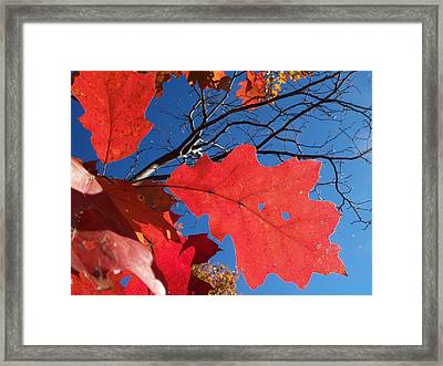 Red On Blue Framed Print