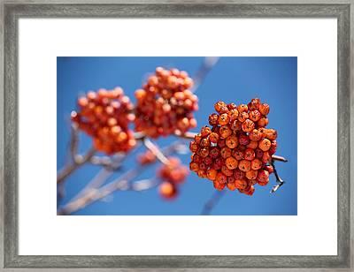 Red Orange Blue Framed Print by April Reppucci
