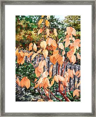 Red Osier Framed Print by Peter Sit