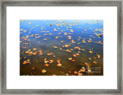 Framed Print featuring the photograph Red Pads by Bill Thomson