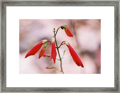 Red Paint Brush Framed Print by