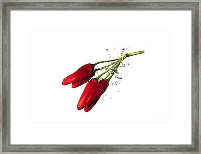 Red Pepper Framed Print by Alessandro Matarazzo