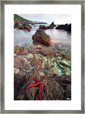 Red Pepper Framed Print by Rui Silveira