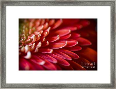 Red Petals Abstract 1 Framed Print