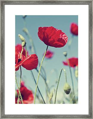 Red Poppies Against Blue Sky Framed Print
