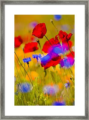 Red Poppies And Wildflowers In A Field, Soft Focus Framed Print by Bob Pool