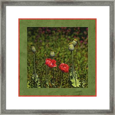 Red Poppies Framed Print by Bonnie Bruno
