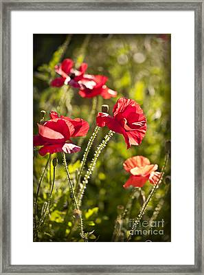 Red Poppies Framed Print by Elena Elisseeva