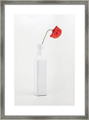 Red Poppy Flower Framed Print by Fausto Favetta Photoghrapher