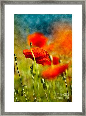 Red Poppy Flowers 01 Framed Print by Nailia Schwarz