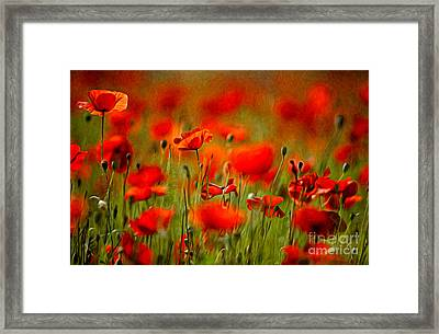 Red Poppy Flowers 02 Framed Print by Nailia Schwarz