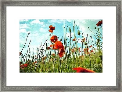 Red Poppy Flowers 03 Framed Print