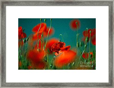 Red Poppy Flowers 05 Framed Print by Nailia Schwarz