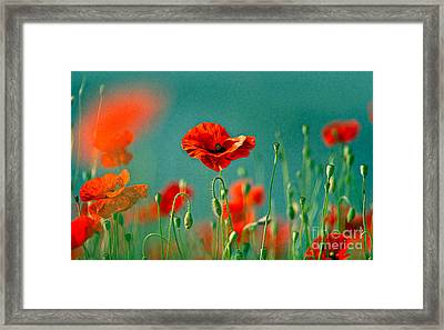 Red Poppy Flowers 06 Framed Print by Nailia Schwarz