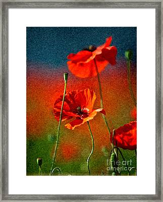 Red Poppy Flowers 08 Framed Print by Nailia Schwarz