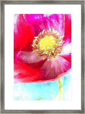 Red Poppy On Blue Framed Print by Carol Leigh