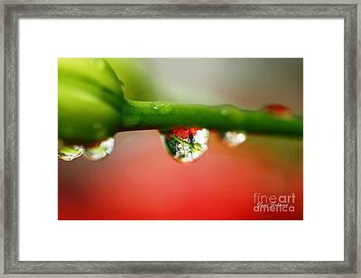 Red Raindrops Framed Print by Yumi Johnson