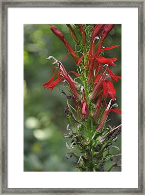 Red Red Flowers Framed Print by Brynn Ditsche