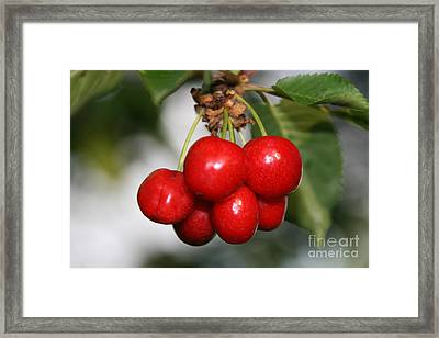 Framed Print featuring the photograph Red Ripe Cherries by Joan McArthur