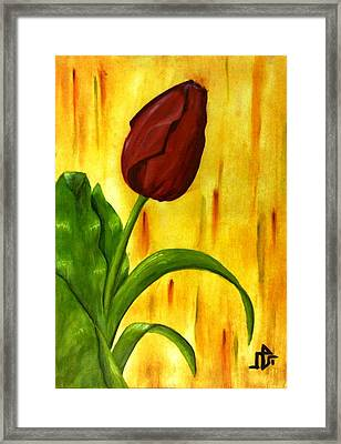 Red Rose Framed Print by Baraa Absi