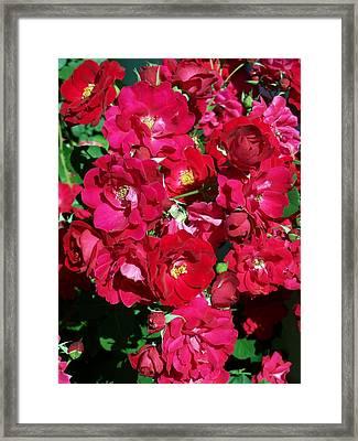 Red Rose Bush Framed Print