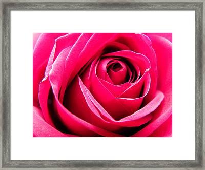 Red Rose Macro Framed Print by Sandi OReilly