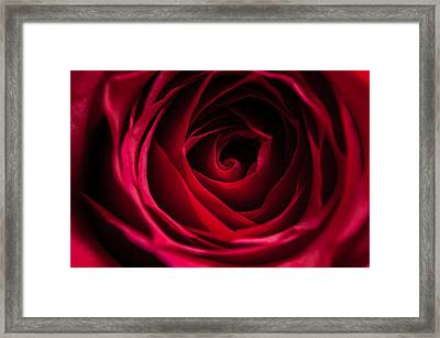 Framed Print featuring the photograph Red Rose by Matt Malloy