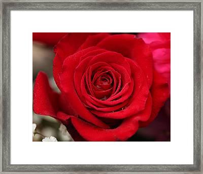 Red Rose Of Love II Framed Print by Sheila Kay McIntyre