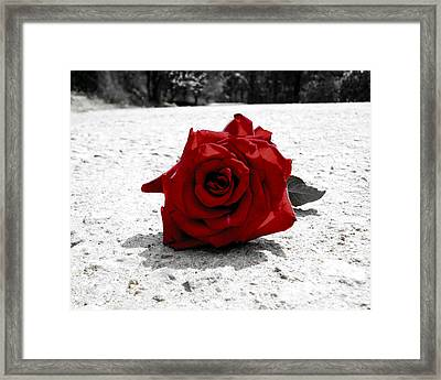 Red Rose On The Road Framed Print by Sumit Mehndiratta