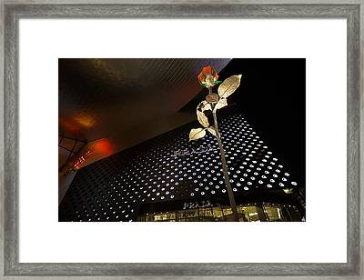 Red Rose Prada Framed Print by Nicholas  Grunas