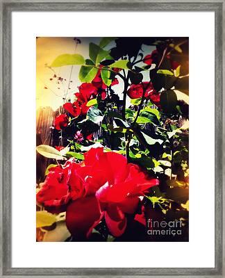 Red Roses Framed Print by Leslie Hunziker