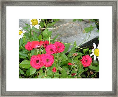 Framed Print featuring the digital art Red Roses by Vicky Tarcau