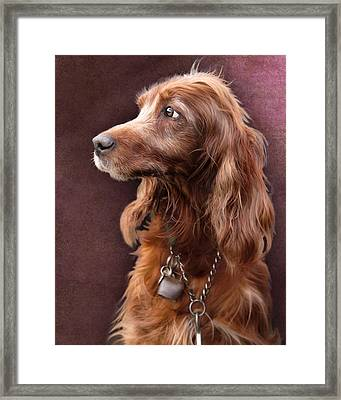 Framed Print featuring the photograph Red Setter Dog Portrait by Ethiriel  Photography