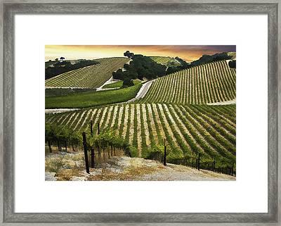 Red Soles Vineyard Framed Print